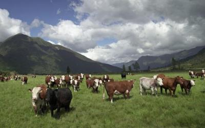 Low-fat, high-protein beef from grass-fed New Zealand cattle is becoming increasingly popular in health-conscious Japan.