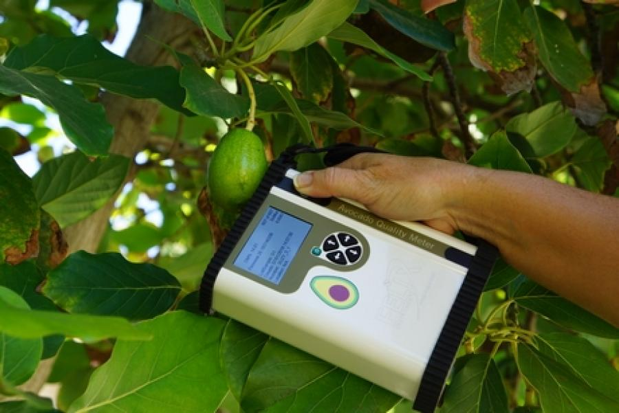 Felix Insttruments have developed an instrument to measure the ripeness of avocados