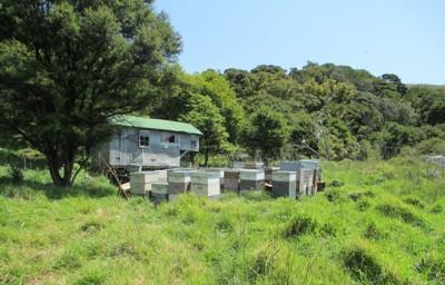 Manuka Honey Re-Invigorates Provinces