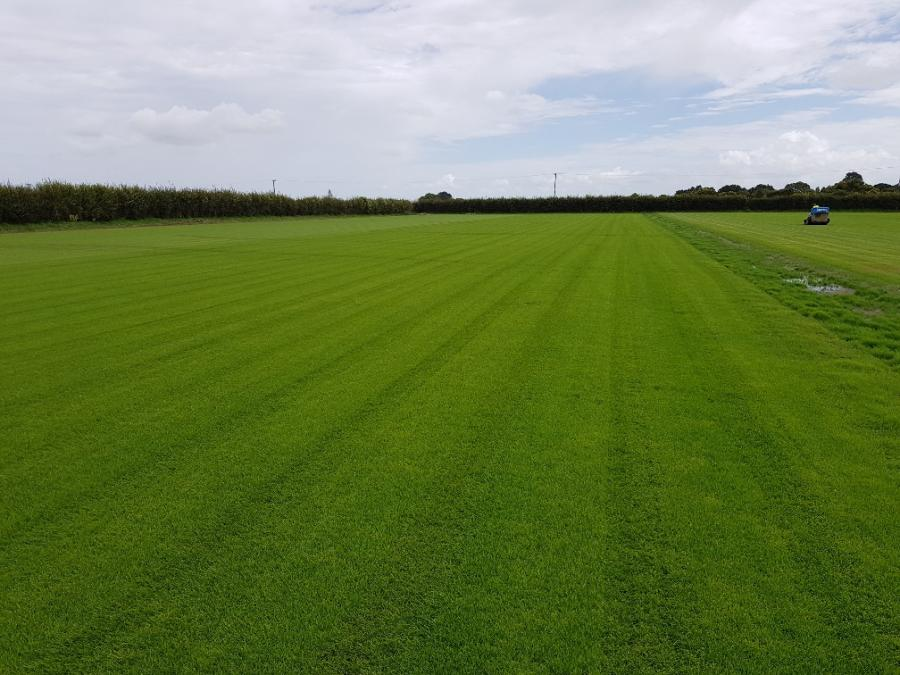 McLean Park returf ready to roll
