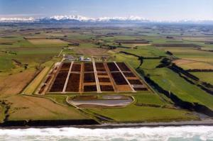 JPEG - 35.8 kb     The Five Star feed lot is the largest commercial feed lot in New Zealand, with up to 20,000 cattle at any one time