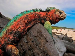 Galapagos Islands & Quito