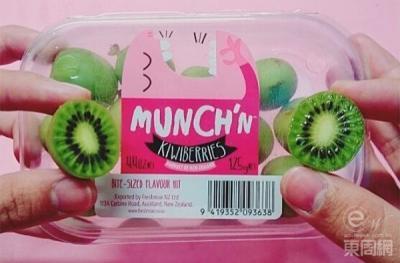NZ Munch'n™ Kiwiberry harvest under way!