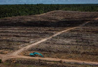 Landcover deforestation and oil palm plantation development