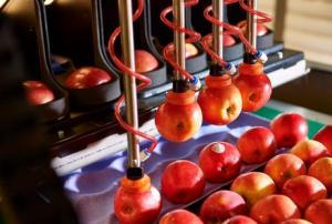 Hi-tech automated robotic apple packer launched