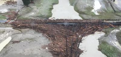 Forestry slash surrounds Wiggan Bridge in Gisborne.