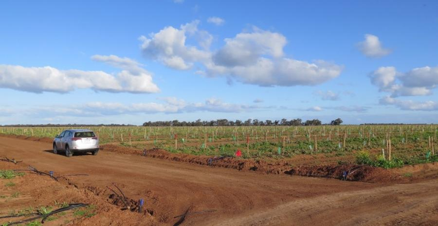 One of our research blocks is planted at a new 2,500-hectare commercial almond orchard in New South Wales.