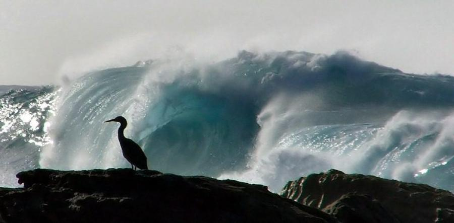 Is New Zealand the shag on the rock of the world trading system?