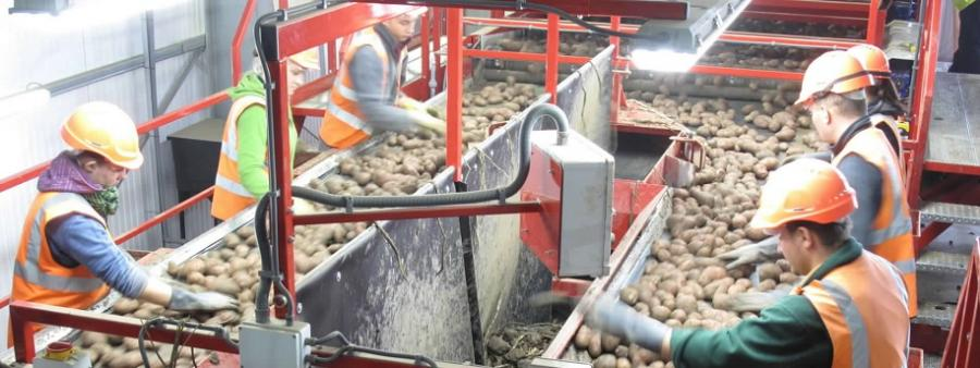New Zealand grower Bostock, processes loads more onions!