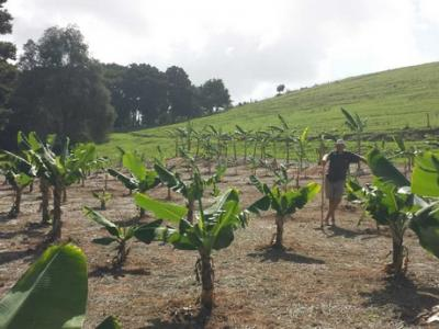 Public visits planned for one of New Zealand's largest tropical fruit farms
