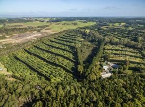 New Zealand avocado orchard up for sale