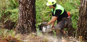 Forest Practice Guides launched