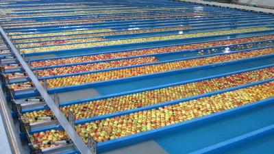T&G Global looks to sell food processing T&G Foods unit