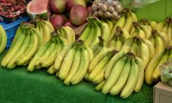 Gisborne to develop tropical fruit demonstration farm.