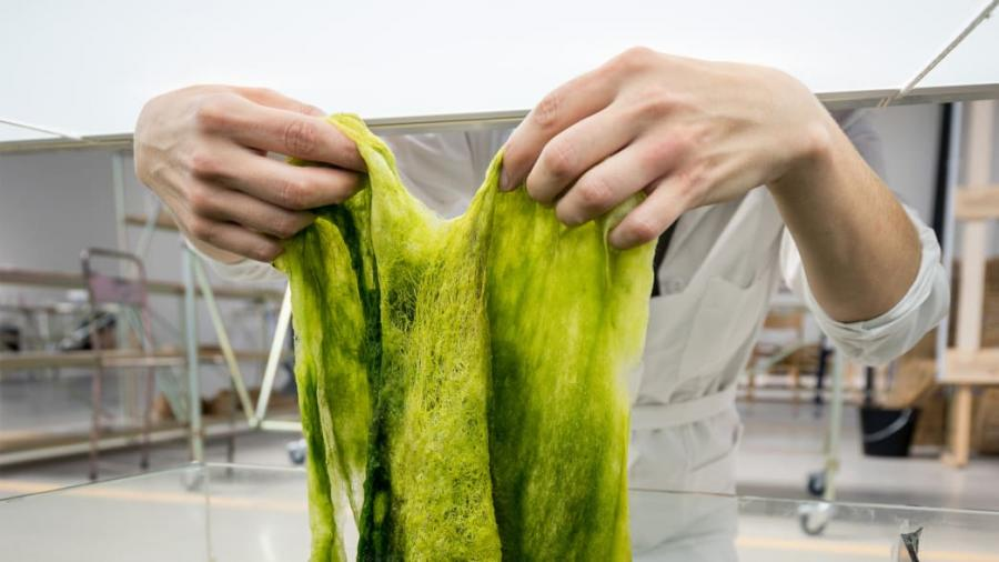 The Creators Of This Algae Plastic Want To Start A Maker Revolution