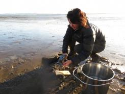Studying the microplastics pollution of Auckland beaches