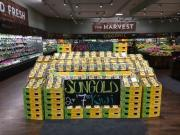 Successful first year of Zespri SunGold kiwifruit