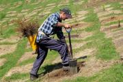 Air New Zealand and Government scope new afforestation fund