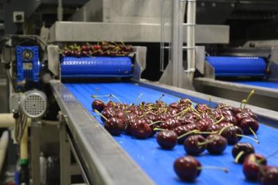 NZ cherries head to Europe for Christmas