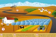Agrophotovoltaics: Solar Farms that Produce Food and Electricity