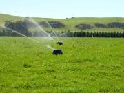 Greenpeace petition misrepresents irrigation facts say IrrigationNZ