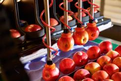 Robotics Plus signs global deal for robotic apple packers