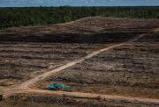Landcover deforestation and oil palm plantation development