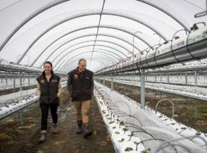 Catherine and Cam Lewis walk through their new strawberry tunnels