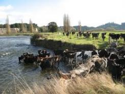 NZ dairy expansion will hit limits as environmental impact grows, must chase value, Guy says