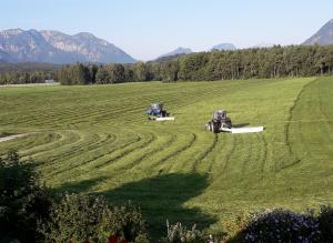 Farm Stay Awakening reveals Central Europe's Agricultural Activity