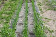 Walki develops new biodegradable mulching paper