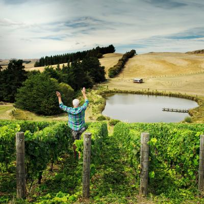 US billionaire's ambitious NZ wine plans