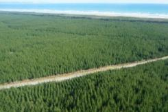New national standard for plantation forestry